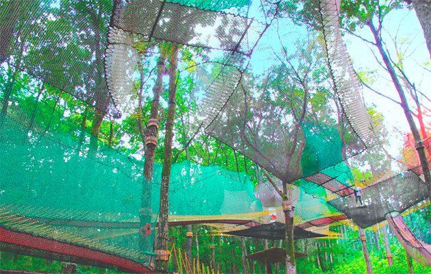 森の空中スポーツイメージ